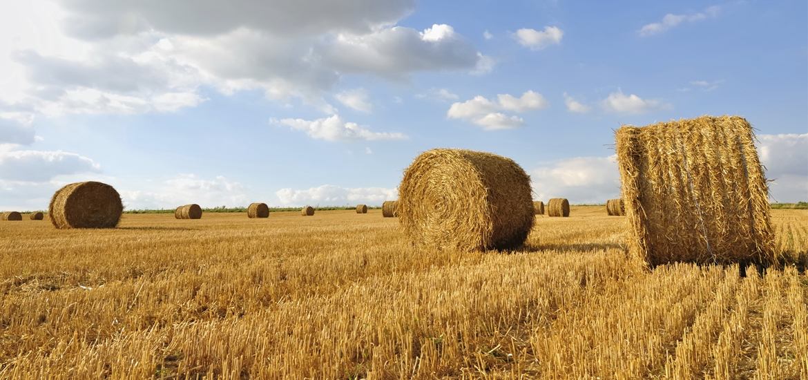 """""""Don't look for the needle in the haystack. Just buy the haystack!"""""""