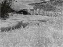 Snow melt in Ireland Creek
