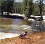 wild life along the creek