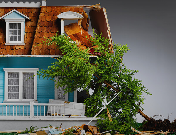 Fallen Tree Damage—Who Pays?